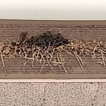 燕さん巣作り